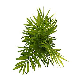 FAIR FLORA® Indoor Plant – Parlour Palmin different heights, optionally with decorative pot