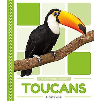 Toucan (animaux de la forêt de pluie)