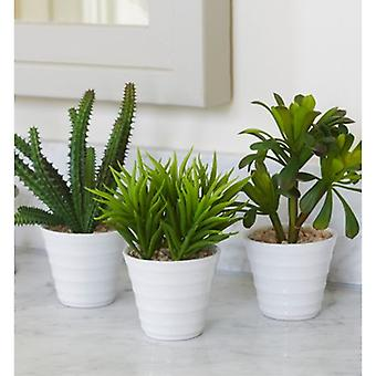 Artificial Potted Succulent x3 Pack