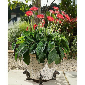 Potty fötter dekorativa häst tema växt pot fötter brons färguppsättning av 3