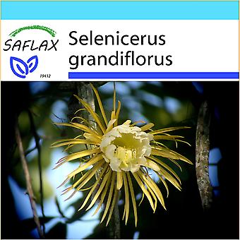 Saflax - Gift Set - 40 seeds - Queen of the Night - Reine de la nuit - Regina della notte - Reina de las flores - Königin der Nacht