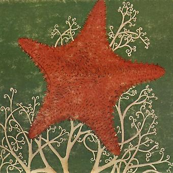 Arm Of The Starfish [CD] USA import