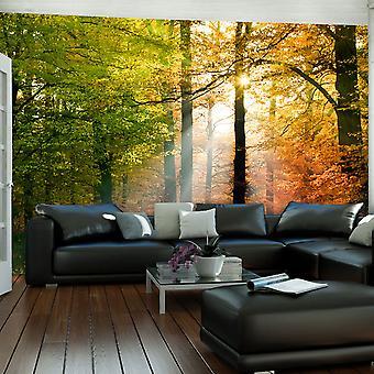 Papier peint - Bel automne