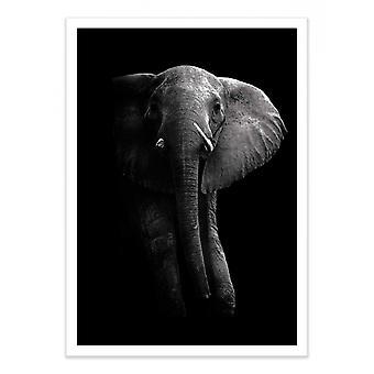 Arte-Cartel - Elefante 50 x 70 cm