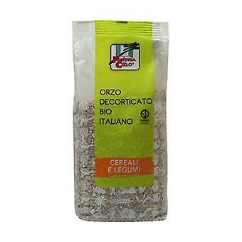 Italian hulled barley None