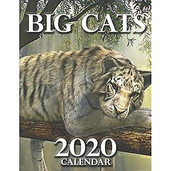 Big Cats 2020 Calendar