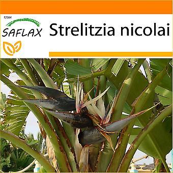 Saflax - tuin in de zak - 5 zaden - White Bird of Paradise - Oiseau de paradis (nicolai) - Uccello del paradiso - Ave del Paraíso gigante - Paradiesvogelblume (nicolai)
