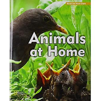 ROYO READERS LEVEL B ANIMALS A T HOME