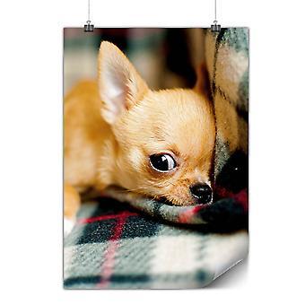 ماتي أو ملصق لامع مع شيهواهوا الكلب لطيف | بئركودا | * q551