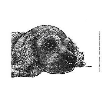 Charlie the Cocker Spaniel Poster Print by Beth Thomas (13 x 10)
