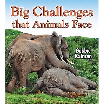 Big Challenges That Animals Face (Big Science Ideas (Paperback))