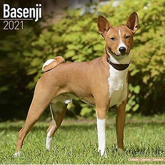 Basenji 2021 Seinäkalenteri tekijä Avonside Publishing Ltd