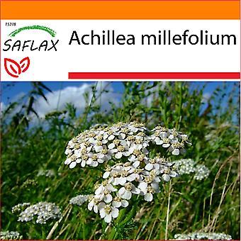 Saflax - Garten in der Tasche - 200 Samen - gemeinsame Schafgarbe - Achillée Millefeuille - Achillea Millefoglie - Milenrama - Schafgarbe