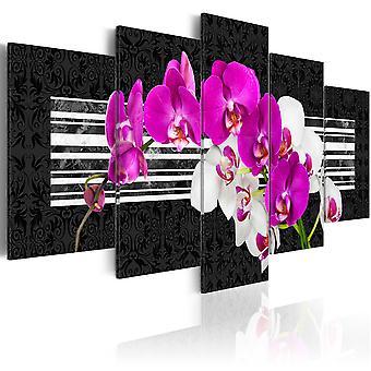 Quadro - Modest orchids