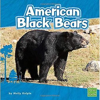 Orso nero americano