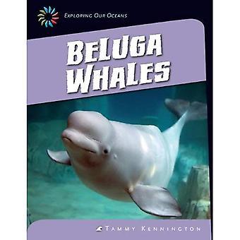 Beluga valar (21st Century färdigheter bibliotek: att utforska våra hav)