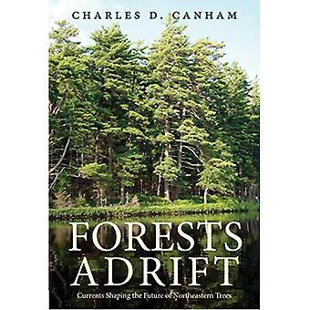 Foreste alla deriva: correnti che modellano il futuro degli alberi nord-orientali