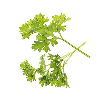 TREGREN Seed Capsules Parsley Two pcs