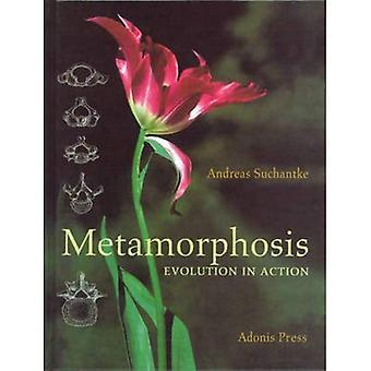 Metamorphose: Evolution in Aktion