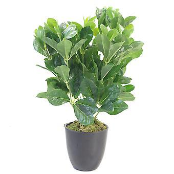 45cm Geranie Aralia (Polyscias Guilfoylei) Bush Kunstpflanze