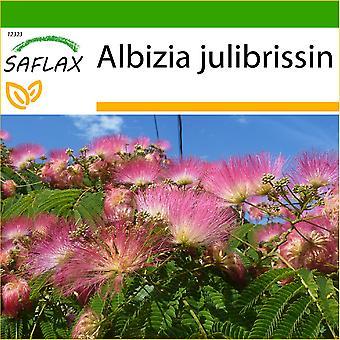 Saflax - 50 semillas - con suelo - Pinc Acacia - Albizia - Albero della seta - Acacia de Constantinopla - Schlafbaum