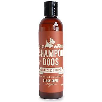 Porkkanansiemenet & Kataja shampoo
