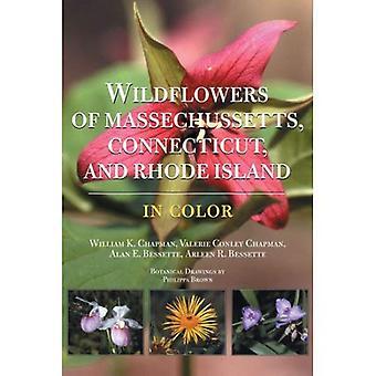 Kwiaty z Massachusetts, Connecticut i Rhode Island w kolorze