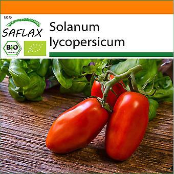 Saflax - Garden in the Bag - 15 seeds - Organic - Tomato - San Marzano - BIO - Tomate - San Marzano - BIO - Pomodoro - San Marzano - Ecológico - Tomate - San Marzano - BIO - Tomate - San Marzano