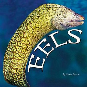 Eels by Darla Duhaime - 9781683424215 Book