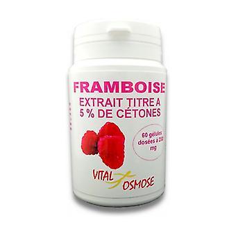 Raspberry extract 60 capsules of 250mg