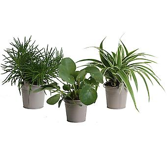 Mini Groene | Trio Eden Collection ® in zomers zink (taupe) - Hoogte 15 - Diameter pot 20