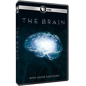Brain with David Eagleman [DVD] USA import