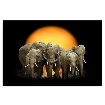 Tela, Immagine su tela, Elefanti 1