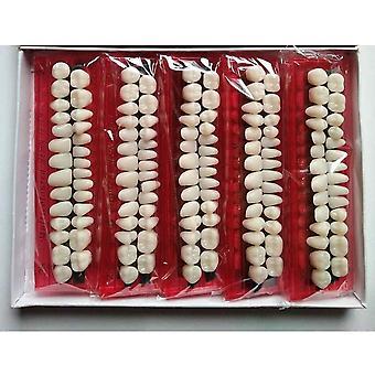 Pro Dental Material Plastic Teeth Teaching Model