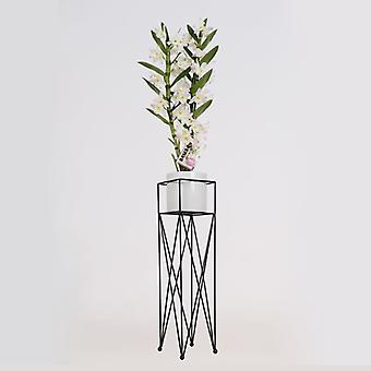 BOTANICLY Dendrobium nobile cultivars - Bambú orquídea