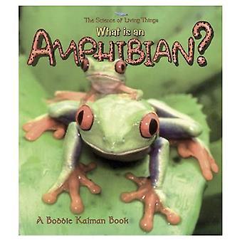 Vad är en amfibie? (Vetenskap av levande ting)