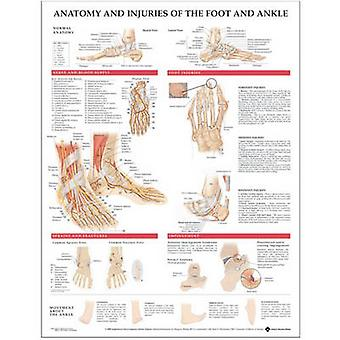Anatomy and Injuries of the Foot and Ankle by Prepared for publication by Anatomical Chart Company