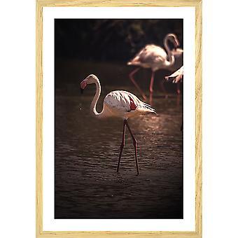 Affiche flamingo in miami