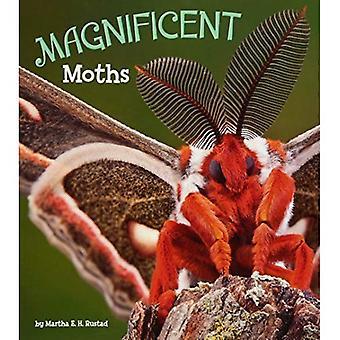 Herrliche Motten (A + Bücher: wunderbare Minibeasts!)