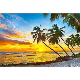 Tapete Mural Barbados Sonnenuntergang