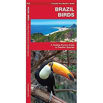 Brazil Birds (Pocket Naturalist Guide)