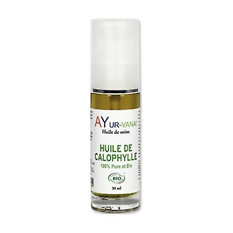 Organic Calophyllum Oil 30 ml of oil