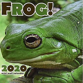 Frog! 2020 Mini Wall Calendar