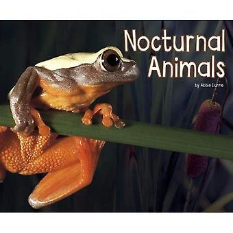 Nachtaktive Tiere (Pebble Plus: Life Science)