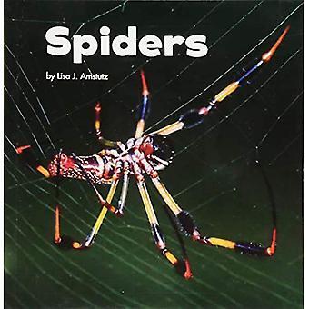 Spiders (Little Pebble: Little Creatures)