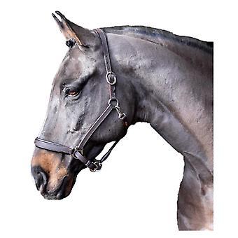 Whitaker Ready To Ride Leather Horse Headcollar
