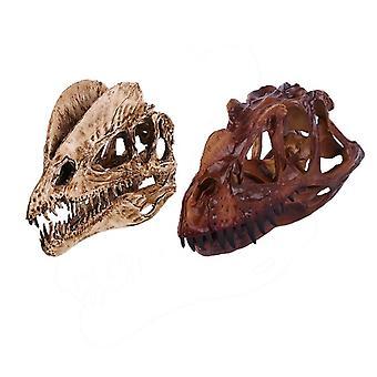 Realistic Dinosaur Skull 2 Piece Pack Resin Model Dilophosaurus And Ceratosaurus Collection Medical Education