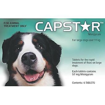 Capstar suuri koira tabletit