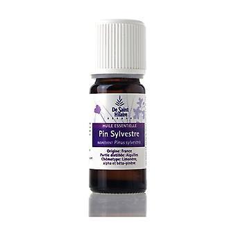 Essential oil Pine Sylv. Organic 10 ml