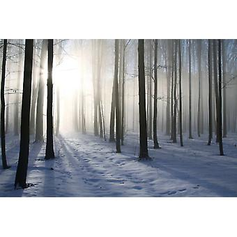 Floresta de inverno enevoado mural do papel de parede